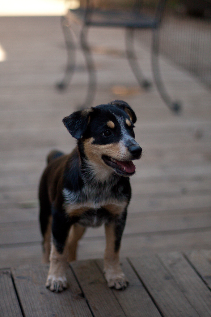 Image Result For Can Dogs Identify