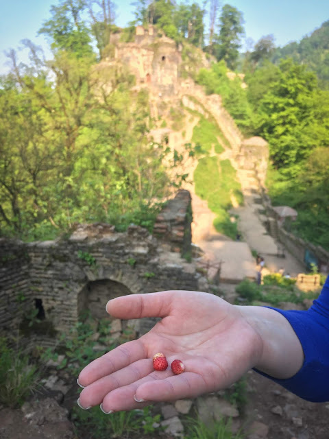 Wild strawberries; Rudkhan Castle, Iran