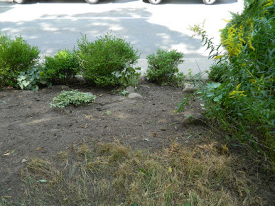 Toronto Front Garden Cleanup in Koreatown After by Paul Jung Gardening Services--a Toronto Organic Gardener