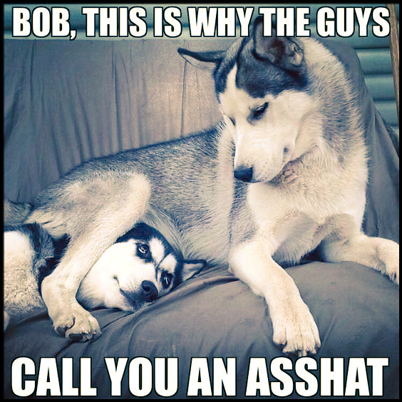 Bob, This is why the guys call you an asshat. #animals #dogs #funny #humor #huskies