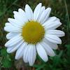 [BangHitz] OluwaJimmy - Daisy mp3 Download