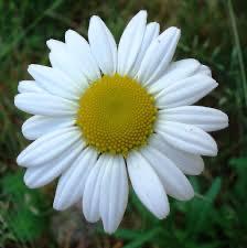 OluwaJimmy - Daisy