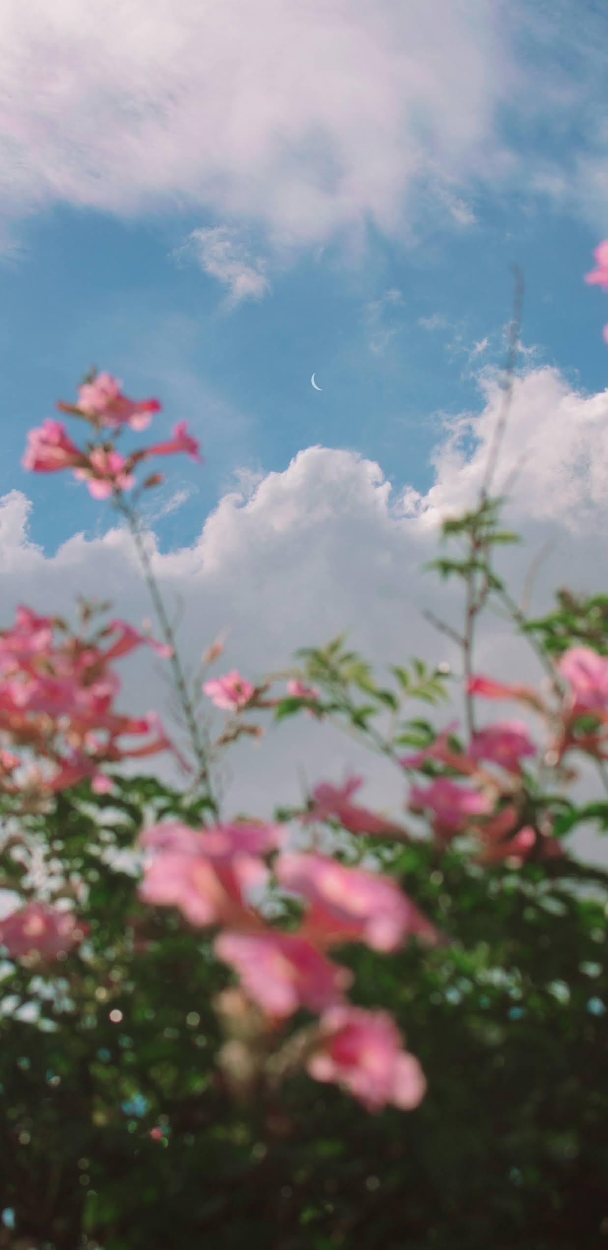 Flower under cloudy blue sky