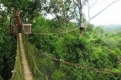 Bukit Bangkirai Kalimantan Timur