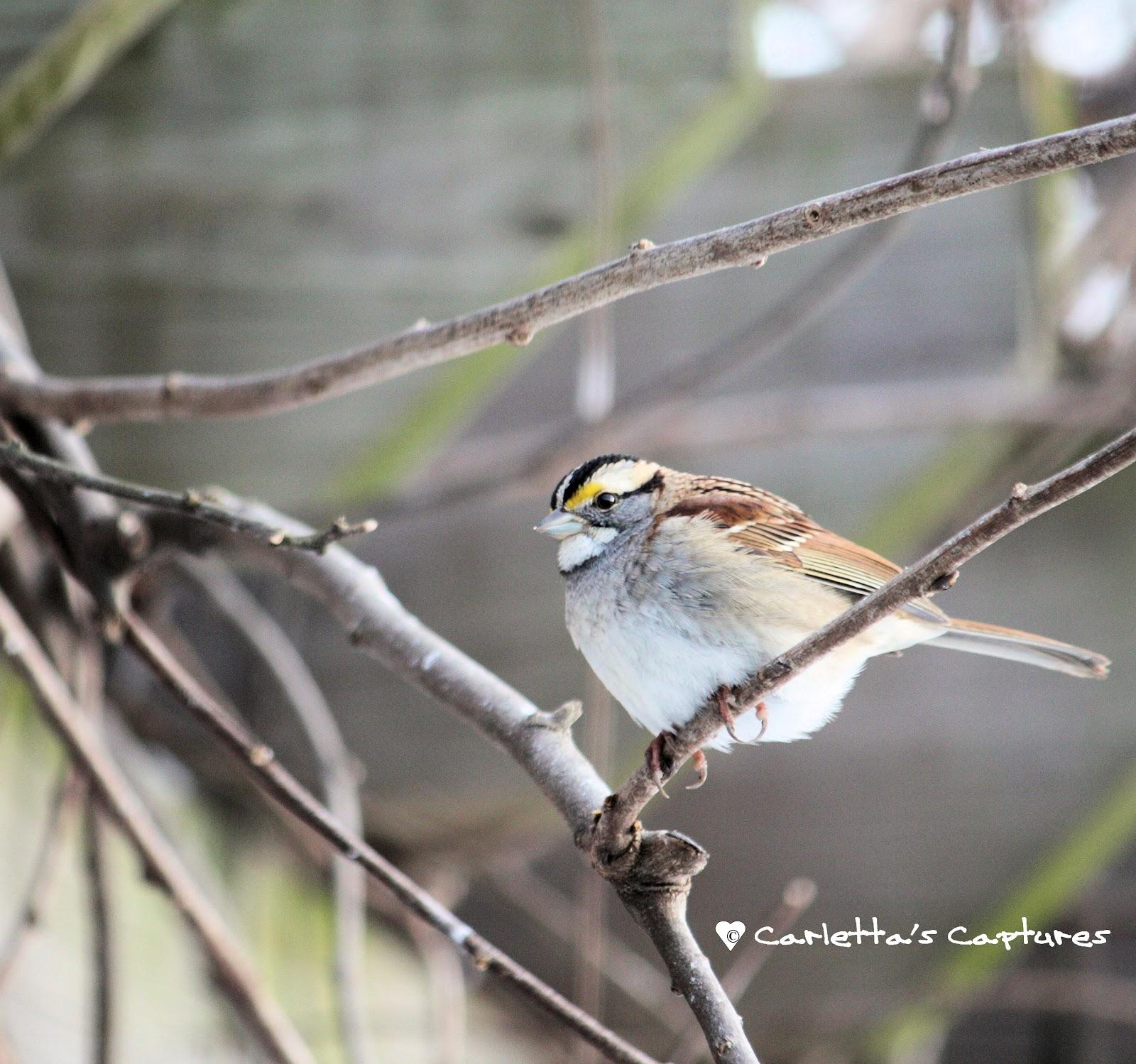 Wild Birds Back Yard: Round The Bend: Wild Birds: In My Backyard