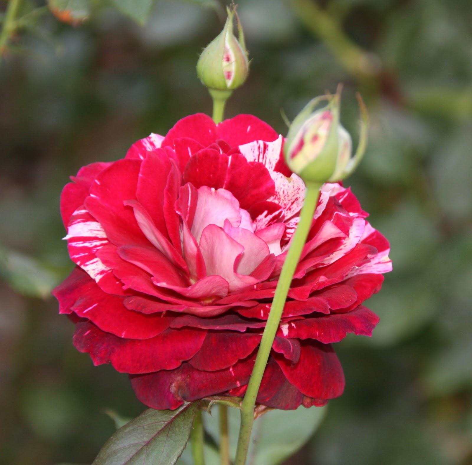 Fotos de flores hermosas y sus nombres - Flores mas bonitas ...