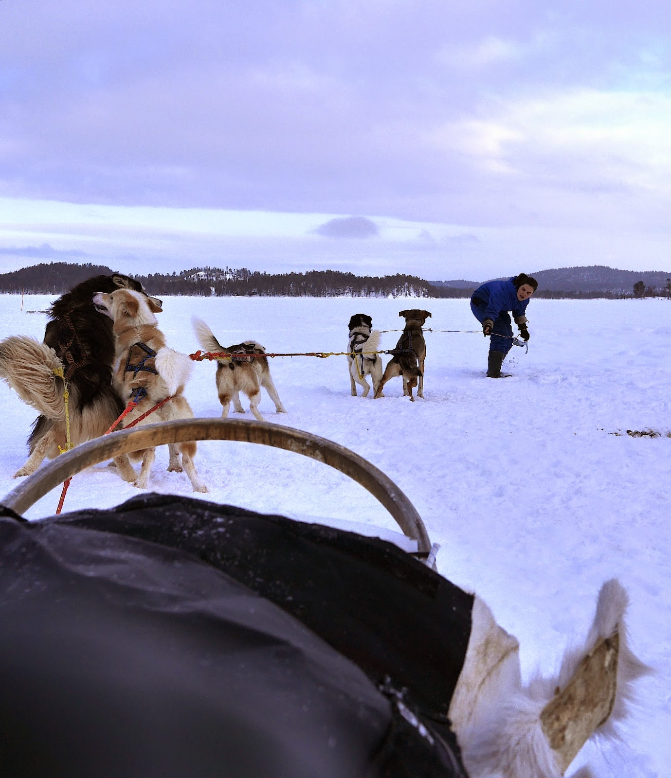 Husky Sled, Finland