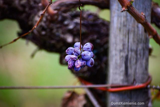 Ostatnie winogrona - Dom z Kamienia