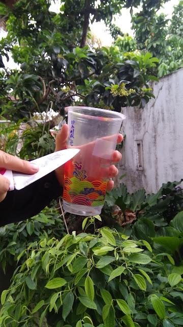 Memanfaatkan gelas bekas untuk pot sayuran