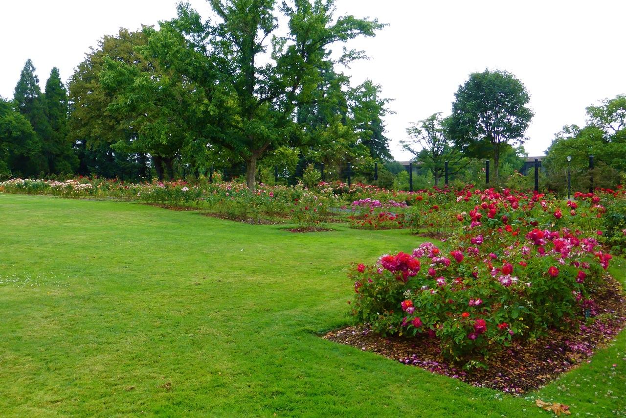 Owen Rose Garden, rose garden, roses, garden