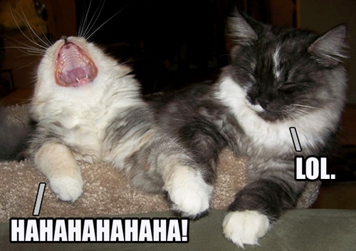 2 funny laughing cats • HAHAHAHAHAHA • LOL
