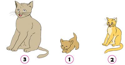 tahapan pertumbuhan dan perkembangan Kucing www.simplenews.me