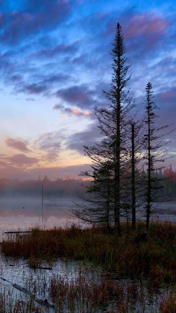 Swamp, fog, twilight wallpaper