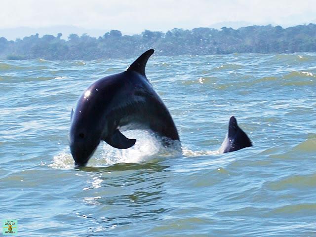 Delfines en Manzanillo, Costa Rica