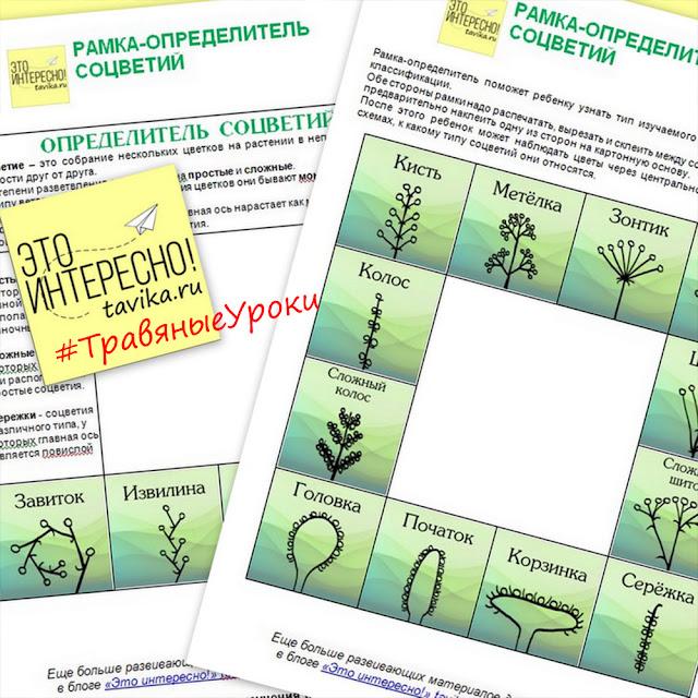 пособие для детей по ботанике