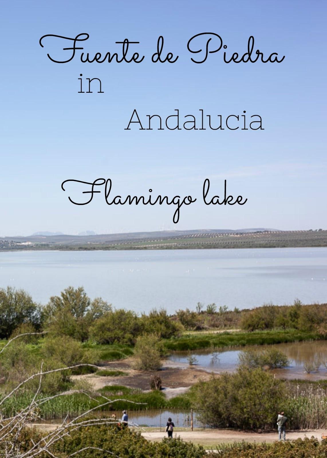 Flamingo lake in Andalucia