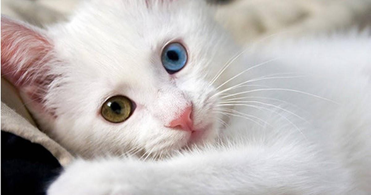 Nama Kucing Menurut Islam Dan Artinya 81021 Nama Untuk Kucing Comel Lucu Dan Unik