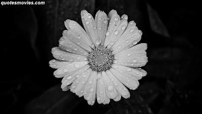 best Free Wallpaper flower