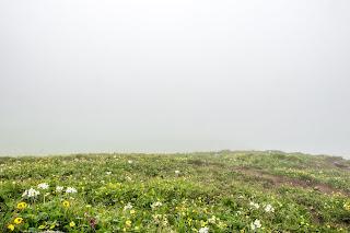 Lush green meadows with carpet of flowers en route Srikhand Mahadev Yatra