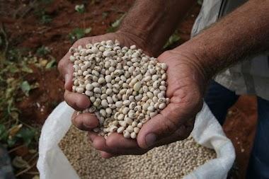 IBGE estima safra de 8,6 milhões de toneladas de grãos em 2020