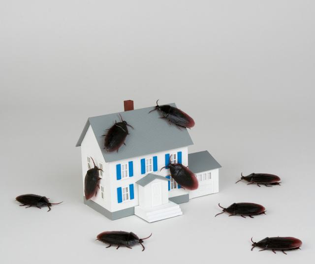 desinsectar cucarachas sevilla