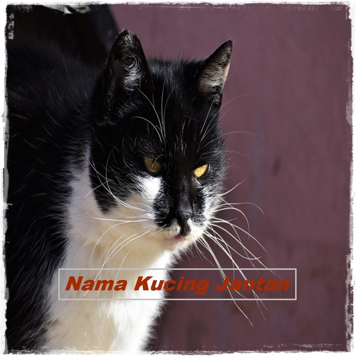 Nama Kucing Lucu Jantan / Laki-Laki yg Bagus dan Keren