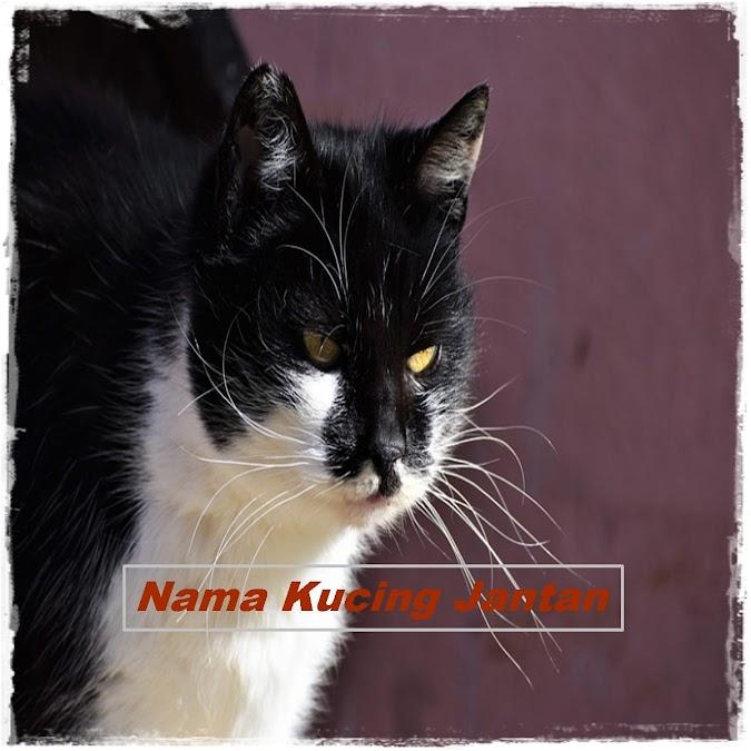 Nama Kucing Jantan yang Bagus dan Lucu Lihat Disini