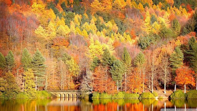Rừng cây nhiều màu sắc