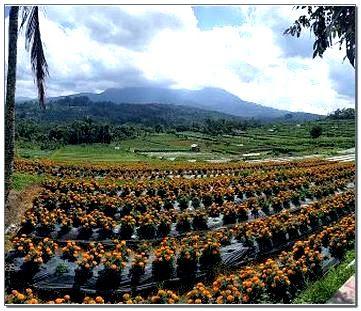 Kebun Bunga Gemitir Bali