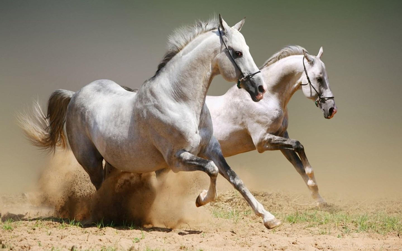 خيول خلفيات شاشة كمبيوتر 4k