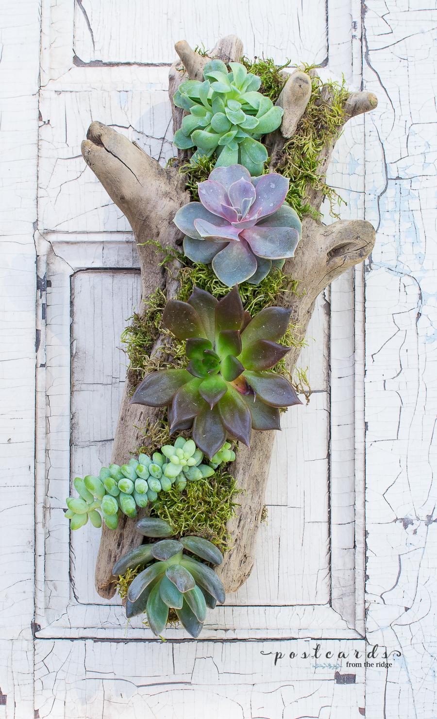 DIY driftwood succulent planter