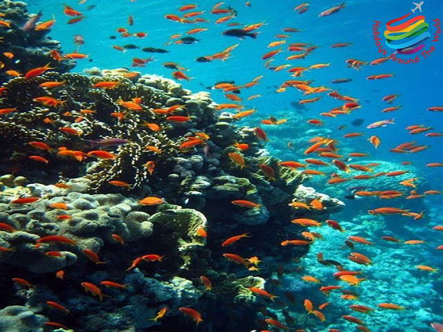 Coral Reefs - Red Sea Egypt