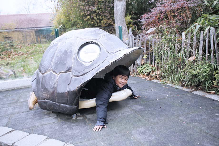 tiergarten schönbrunn turtle