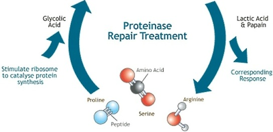 docte proteinase repair treatment