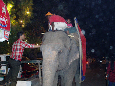 Yohoo! Elephant Ride