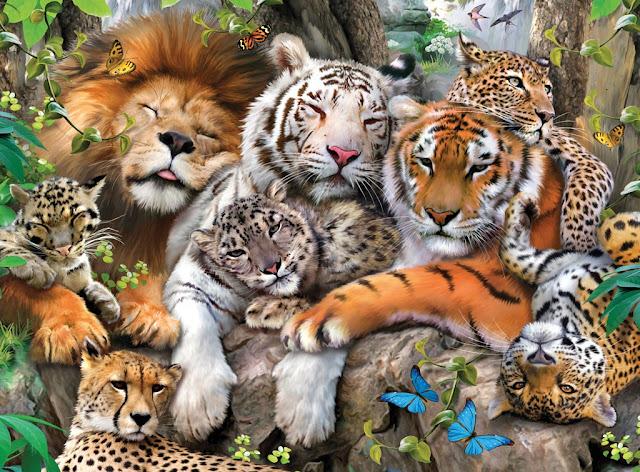especies-animales