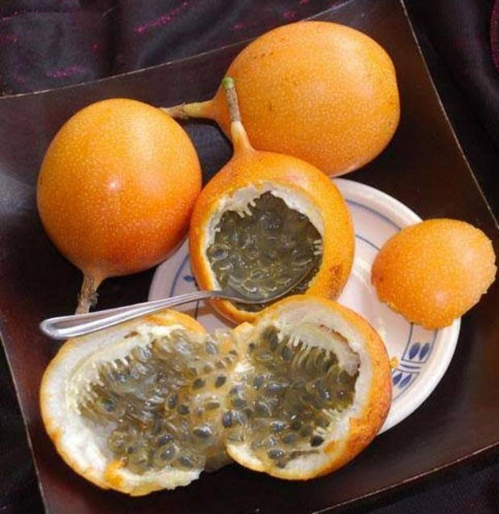 Bibit buah markisa manis Maluku Utara