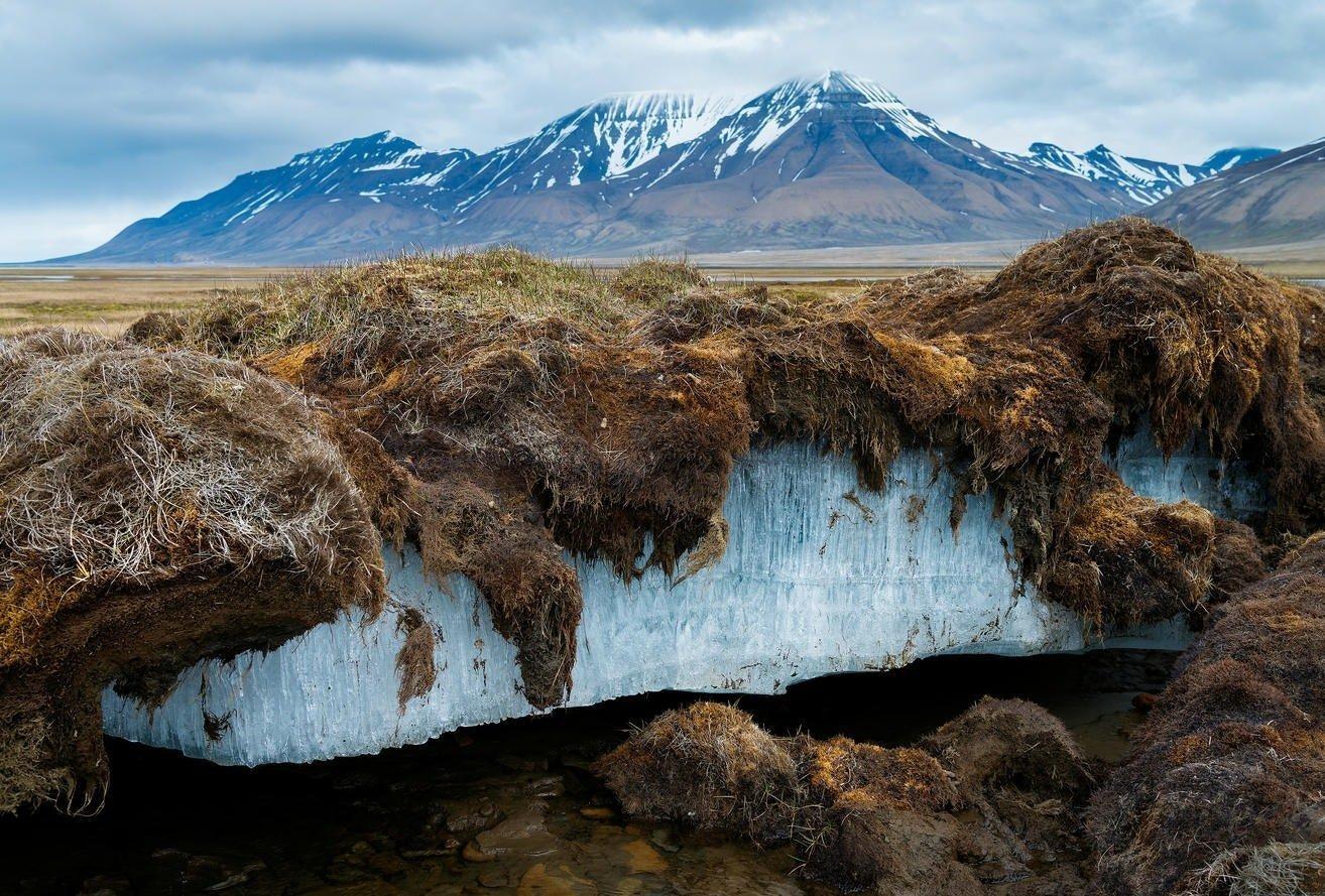 Animal Congelado Revive Después de Miles de Años