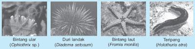 Pengertian, Ciri-ciri dan 9 Filum Klasifikasi Kingdom Animalia