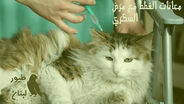 معالجة مرض السكري عند القطط في المنزل
