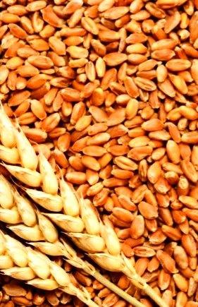 Macam Macam Bahan Pangan : macam, bahan, pangan, Jenis, Serta, Manfaat, Bahan, Pangan, Serealia
