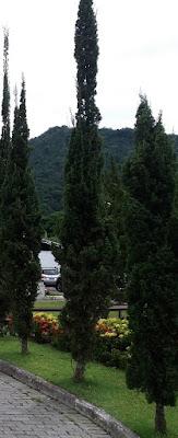 Foto de uma árvore. A árvore de dinheiro e renda passiva