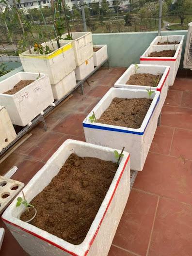 Hoàn thành các thùng xốp trồng cây bán thủy canh