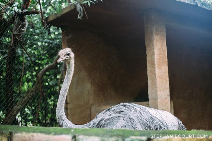 puerto vallarta zoo