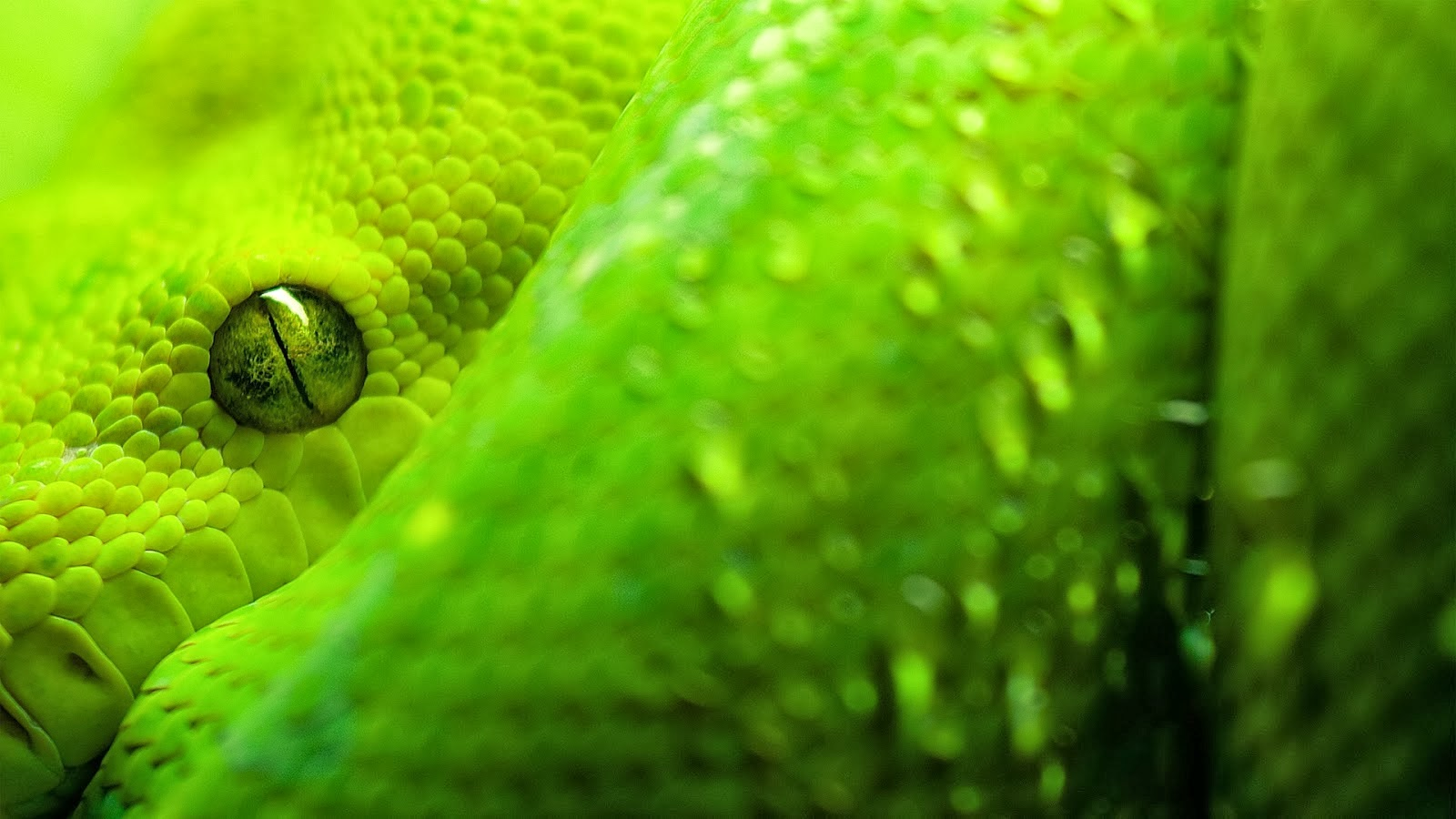 World Best Dangerous Snake HD Wallpapers