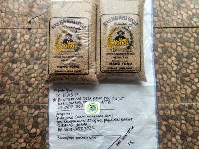 Benih padi yang dibeli IR. H. ASIP Lombok Tengah, NTB. (Sebelum packing karung ).