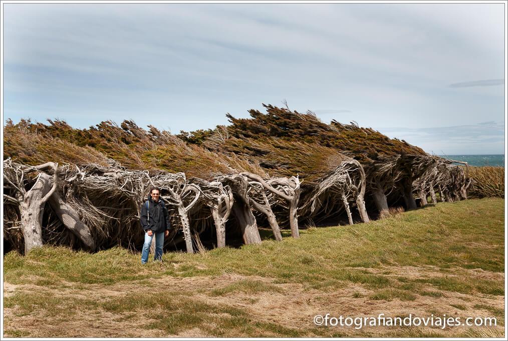 Árboles moldeados por el viento Waipapa point