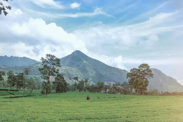 Kebun Teh Tambi Kabupaten Wonosobo Jawa Tengah