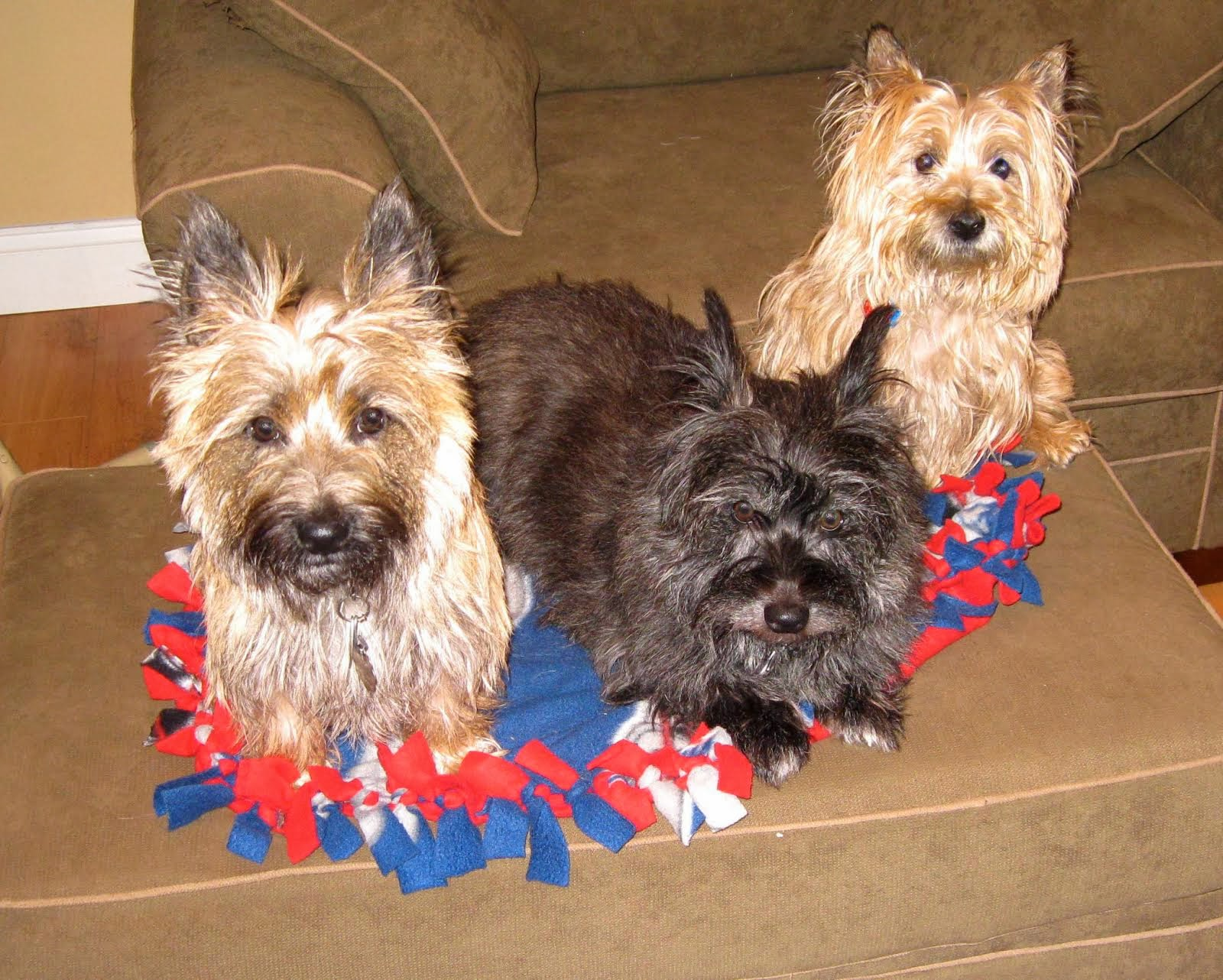 Col  Potter Cairn Rescue Network: Sunday Sweets