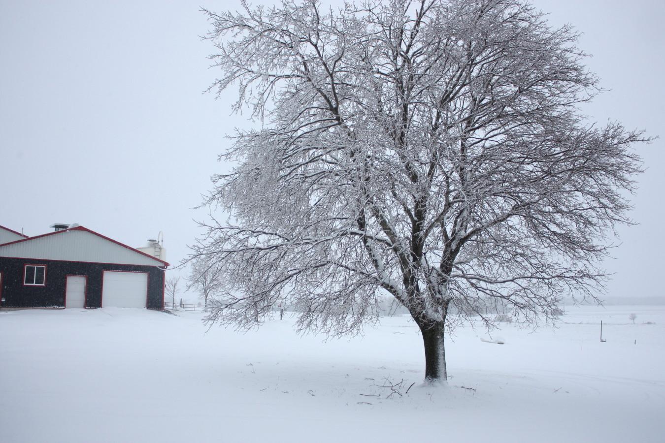 Anja S Photo Journal Snow Over Freezing Rain